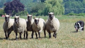 Herding 1 by Cheryl Munson